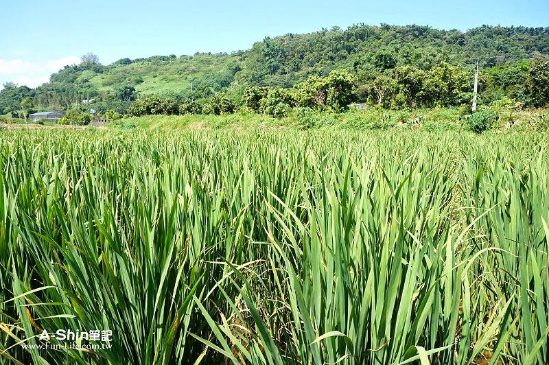桃米休閒農業區1