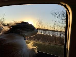 Car rides - wind in my hair!