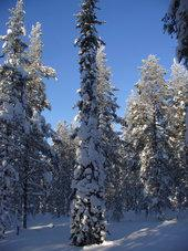http://www.esa.int/var/esa/storage/images/esa_multimedia/images/2017/10/snow-covered_boreal_forest/17226785-1-eng-GB/Snow-covered_boreal_forest_small.jpg