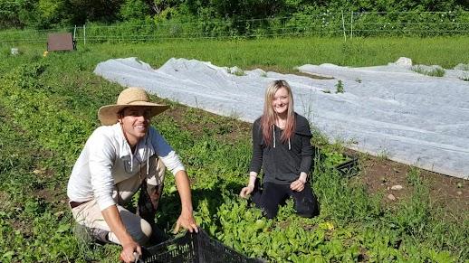 Daniel (2016 Intern) & Paige (Worker Share) Harvesting Spinach