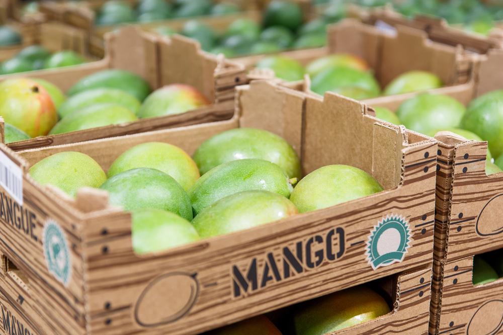 Exportações de manga cresceram 69% em setembro quando comparadas a agosto. (Fonte: Shutterstock)