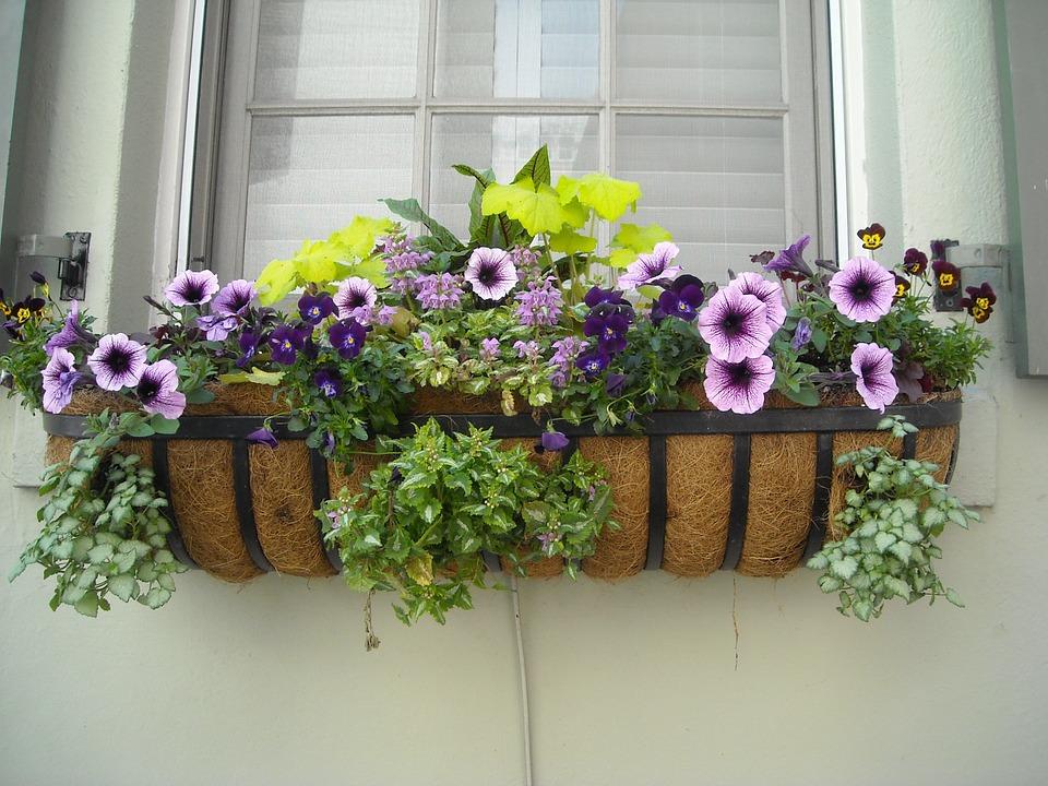 window-box-891985_960_720.jpg