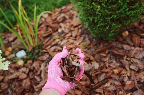 Arborist Wood Chips for Sale in Wisconsin