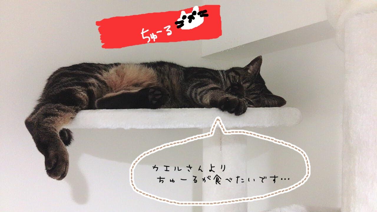 猫は雑食?肉食?気をつけるべき猫のご飯の種類