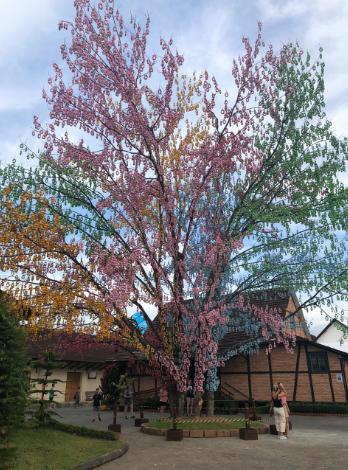 Osterbaum - Árvore de Páscoa Pomerode SC