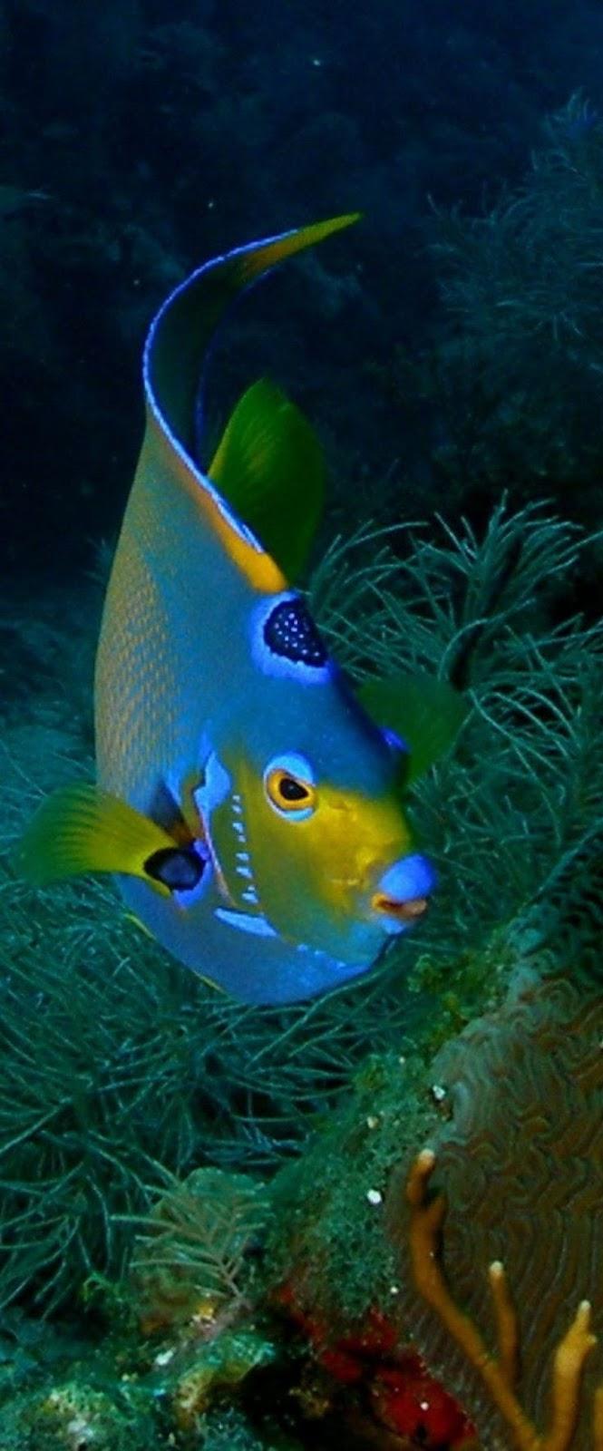 عکاسی از زیر آب