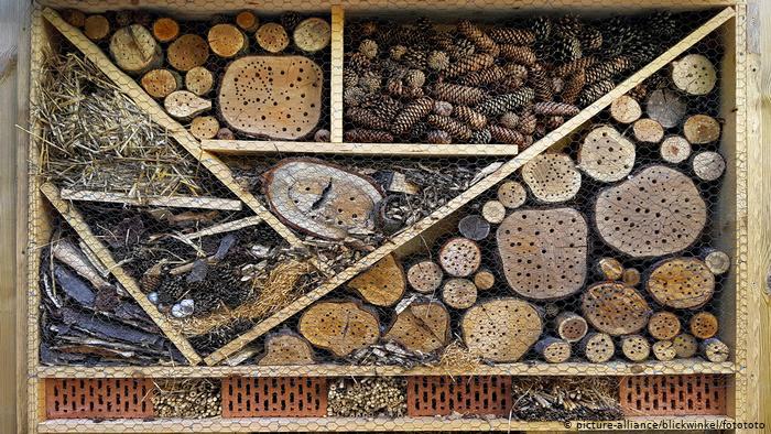 Это - отели для насекомых, которые расставляют экоактивисты, чтобы вернуть крылатымместо для жизни
