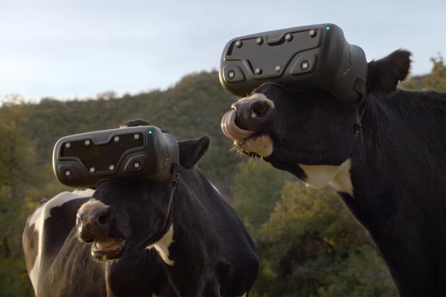 Resultado de imagen para vr cows