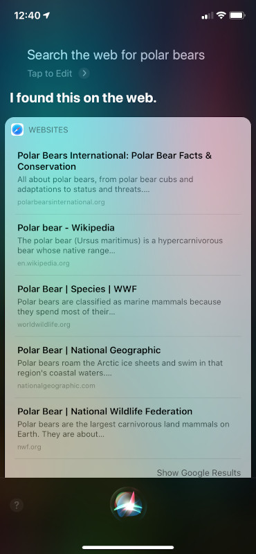 Siri Search UI for Polar Bears