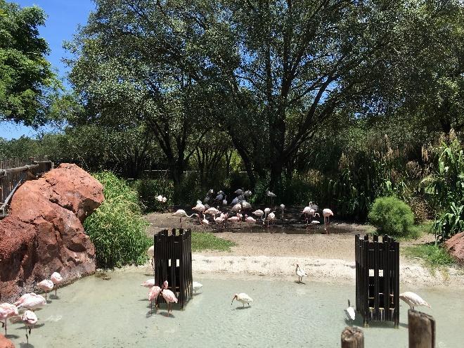 flamingos in pool