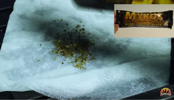 easy sprout method - cannabis seeds