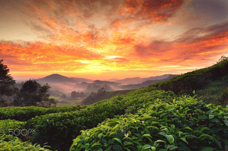 Cao nguyên tuyệt đẹp Cameron - Malaysia