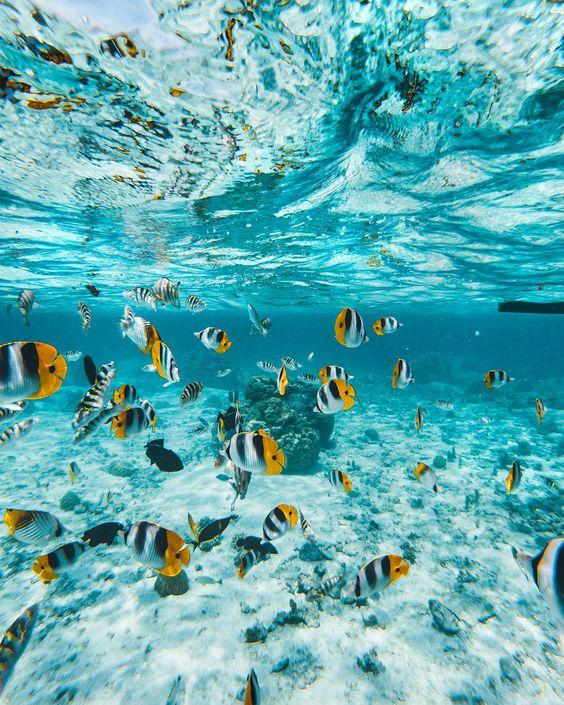 Snorkelling bali, Snorkelling tour