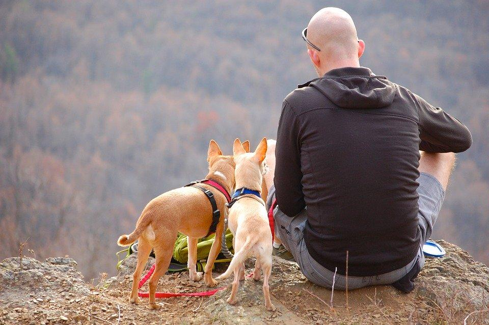 Man, Dogs, Hiking, Edge, Cliff, Camping, Pet, Travel