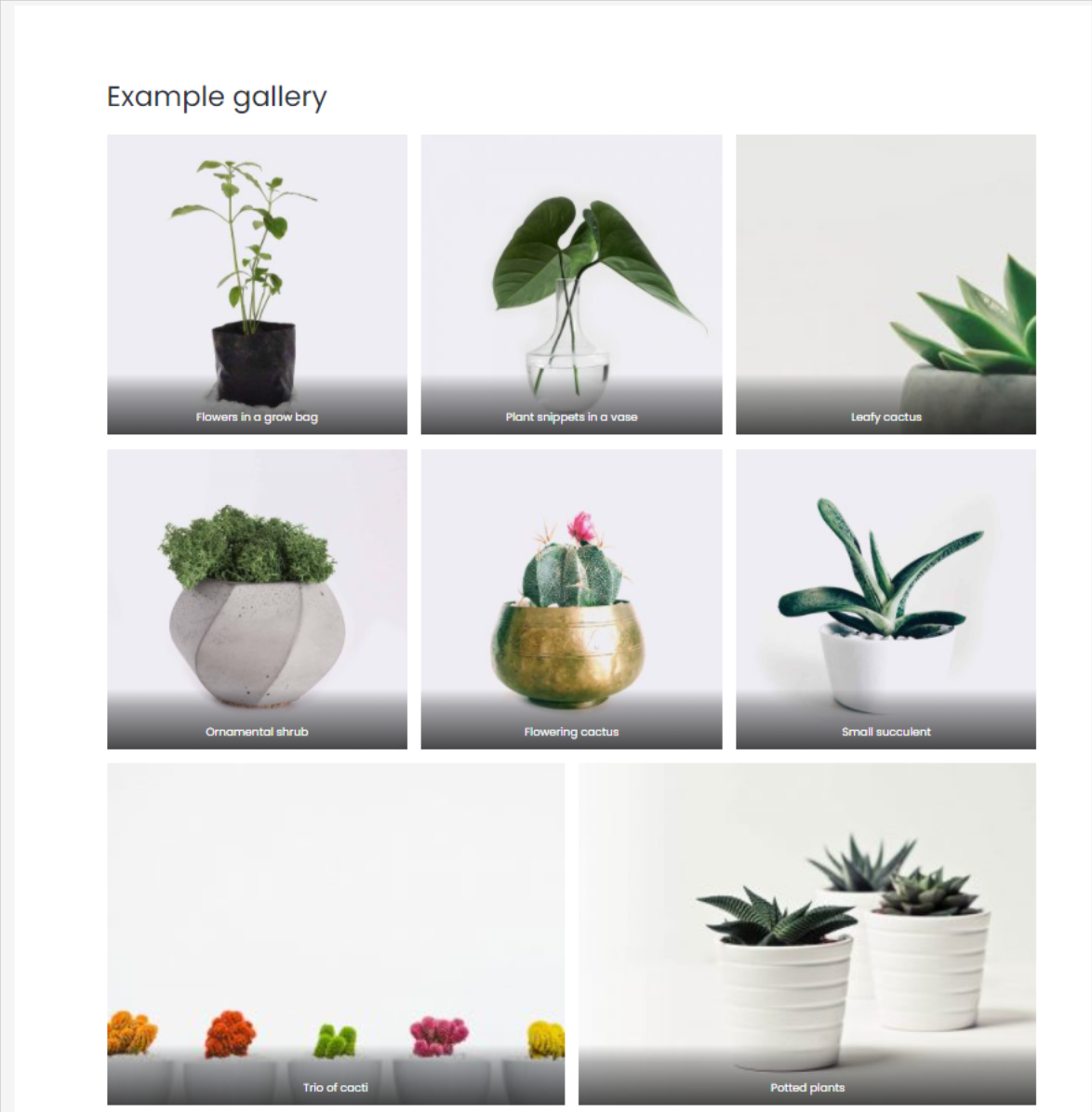 An example gallery is shown with photographs of potted plants.
