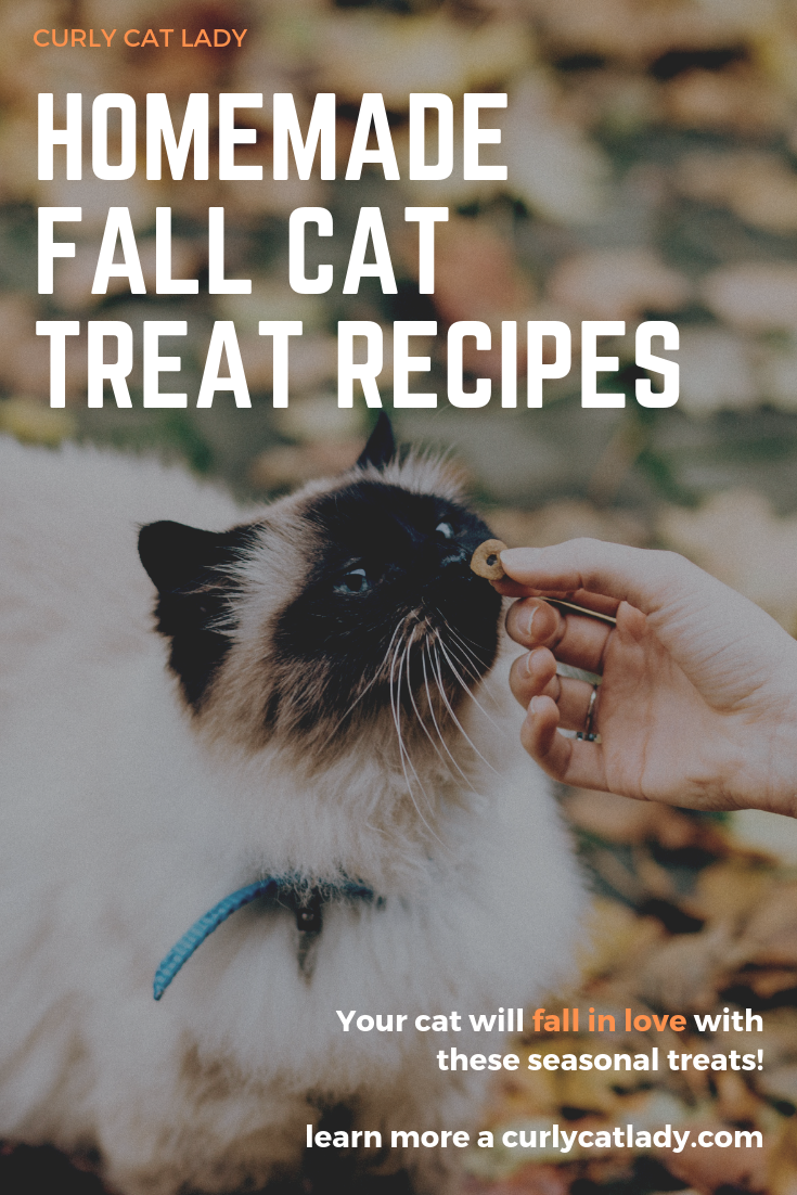Homemade fall cat treats