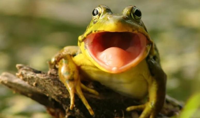4.Mơ thấy ếch kêu
