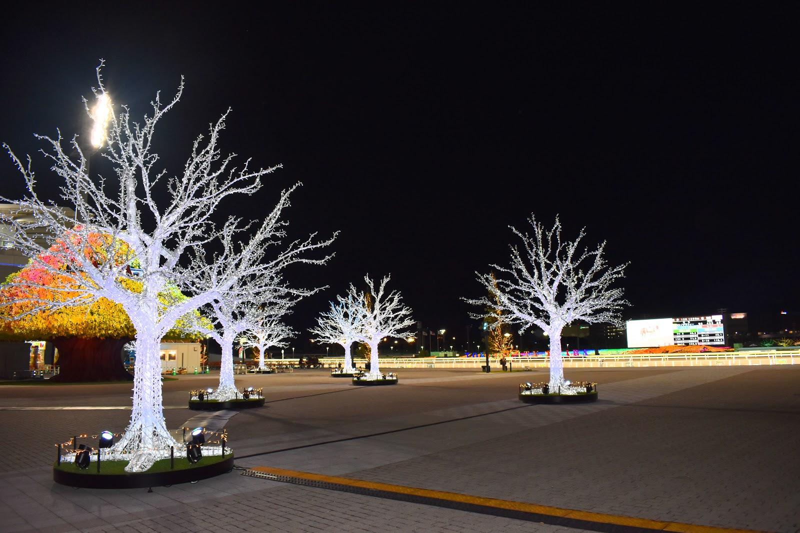 競馬場 トゥインクルレース  大井競馬 クリスマス