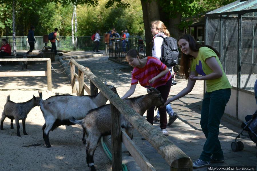 Кормление животных в Берлинском зоопарке