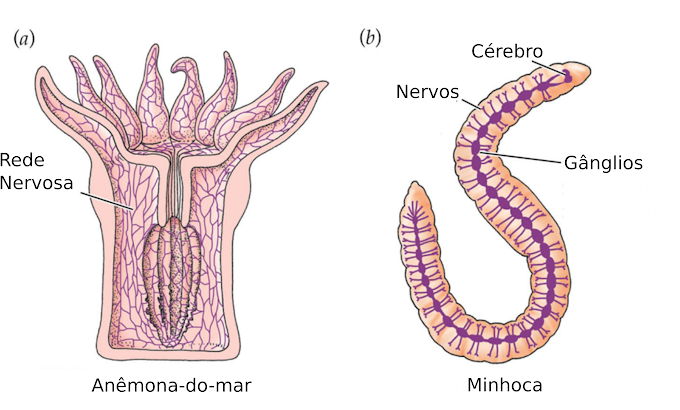 Histologia | Tecido Nervoso