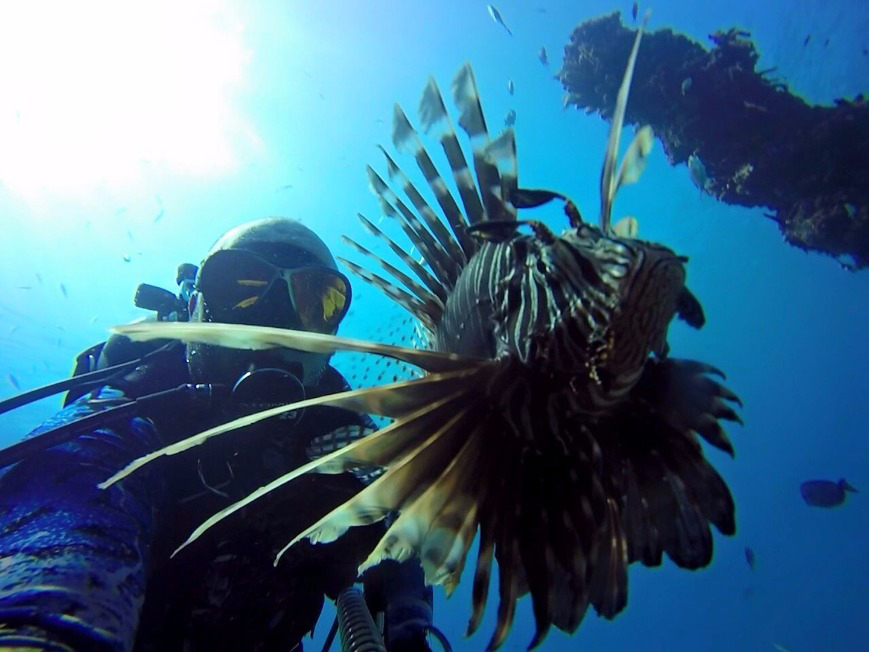 An image of a diver having caught a Lionfish with a spear