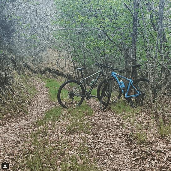 Foto ruta bosque