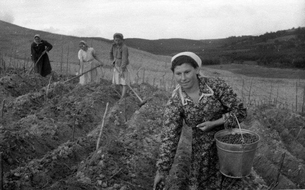 Посев чая в колхозе 8 марта на Закарпатье