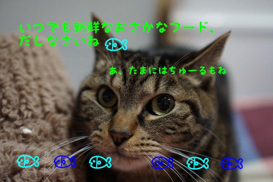 猫のご飯の酸化と劣化を防ぐには?キャットフードの保存方法や保存容器について