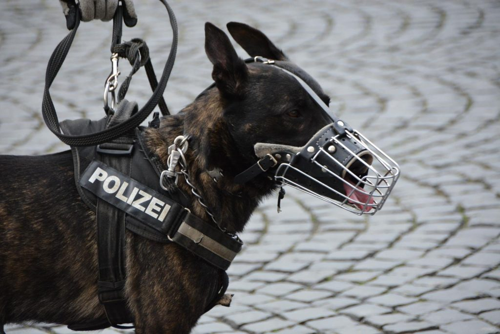 avoid using a muzzle or shock collar on your barking german shepherd
