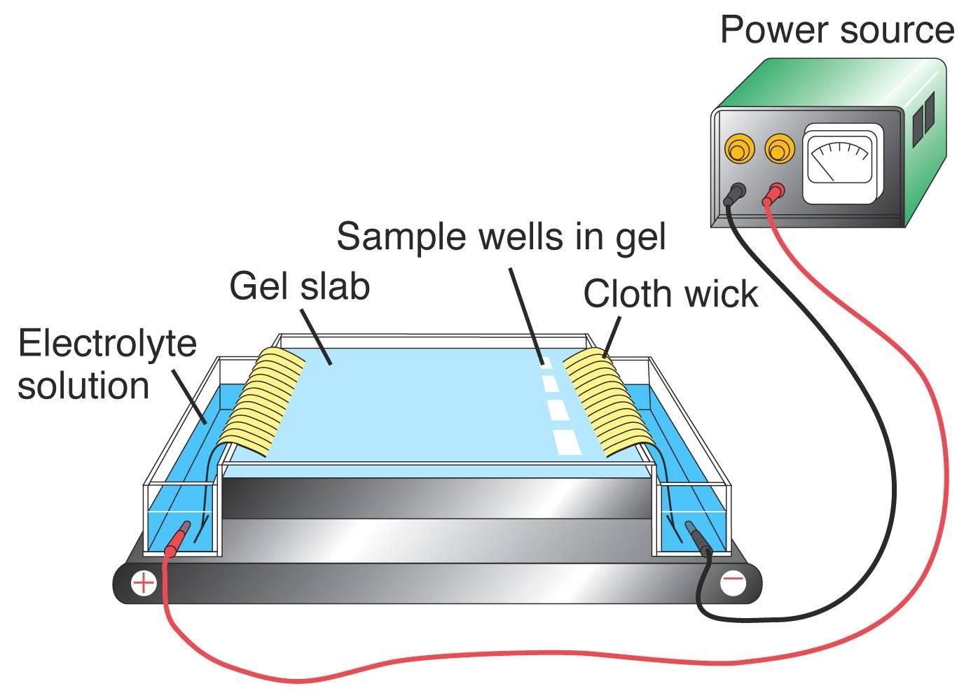 Electrophoresis chamber