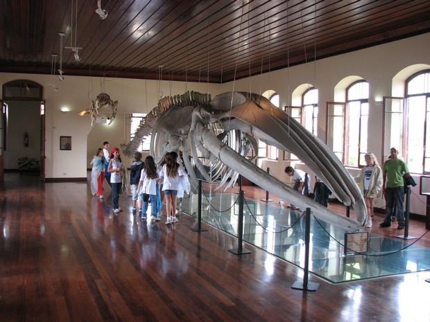 museu-da-pesca-santos-sp-foto-demian-topel.jpg