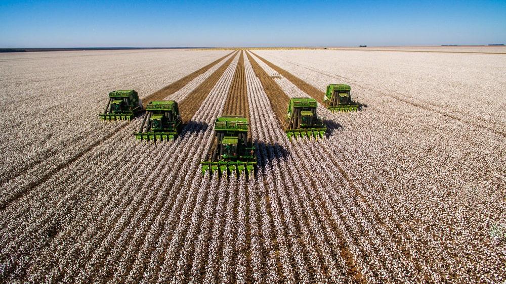 O cultivo de algodão também está sofrendo por causa do atraso na colheita. (Fonte: Shutterstock/lourencolf/Reprodução)