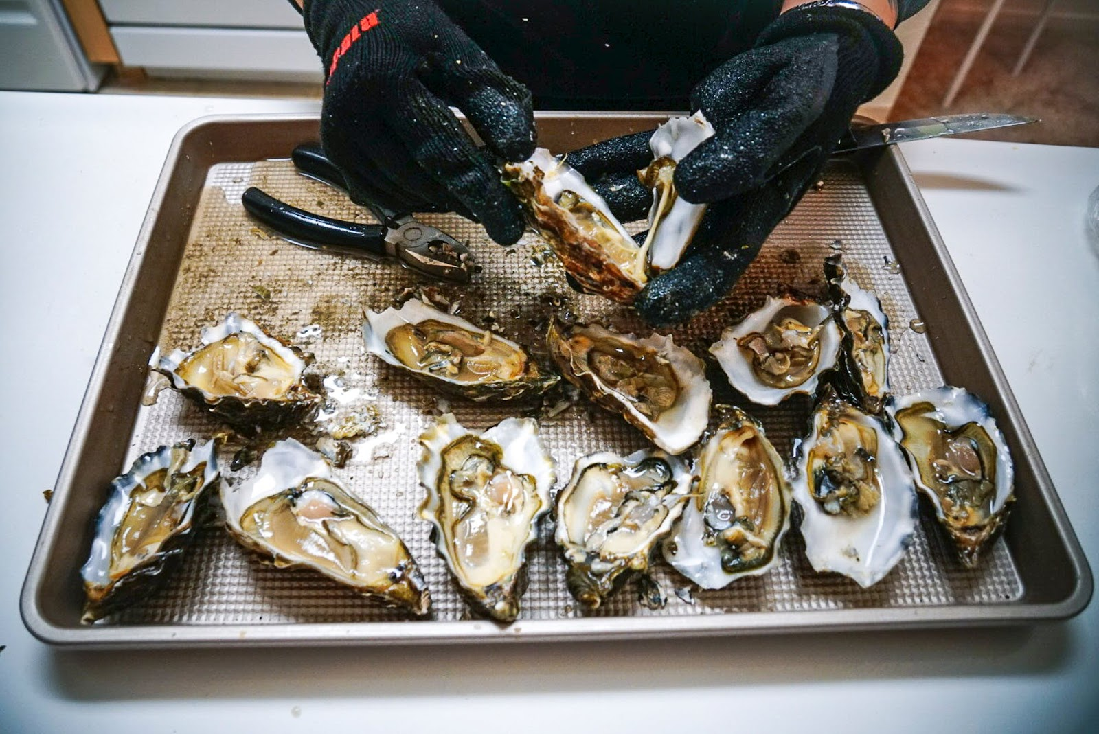 oyster seafood