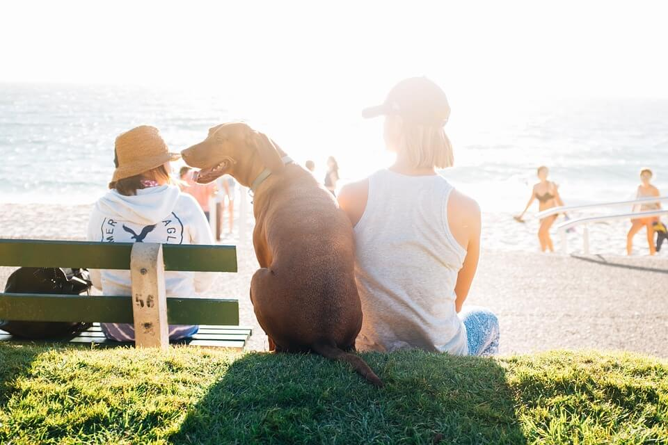 Dog sitting with woman on busy Cottesloe beach in Western Australia. Pet-friendly holiday destinations