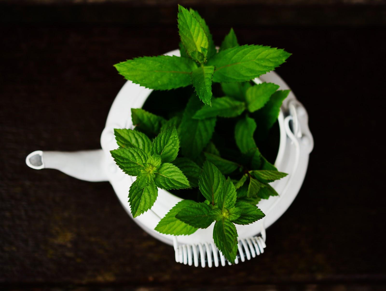 plantes-mincir-diéthétique-sport-perte-poids-bénéfices-conseils-santé-beauté