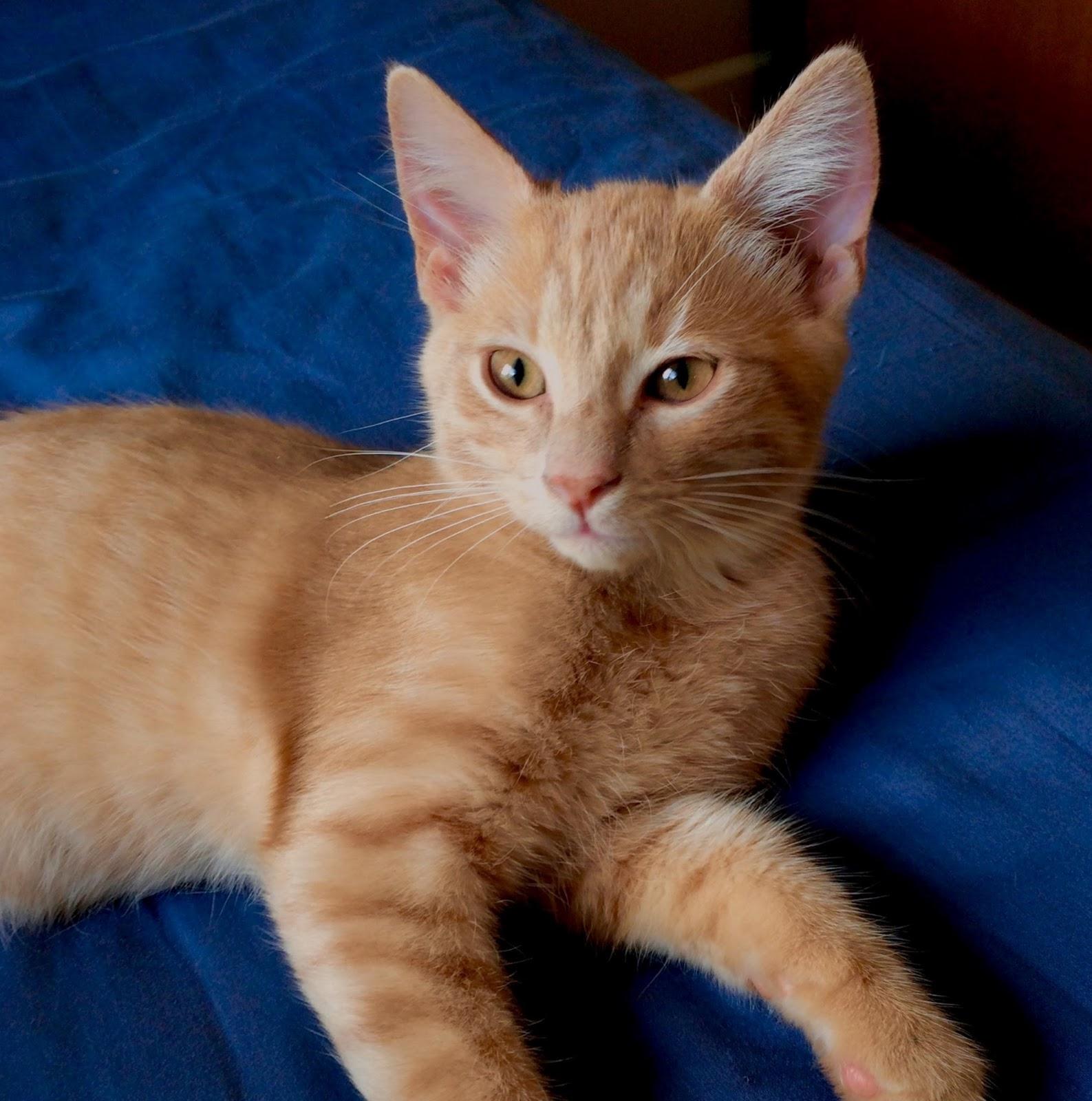 Eric Donahue_Cats2.tif