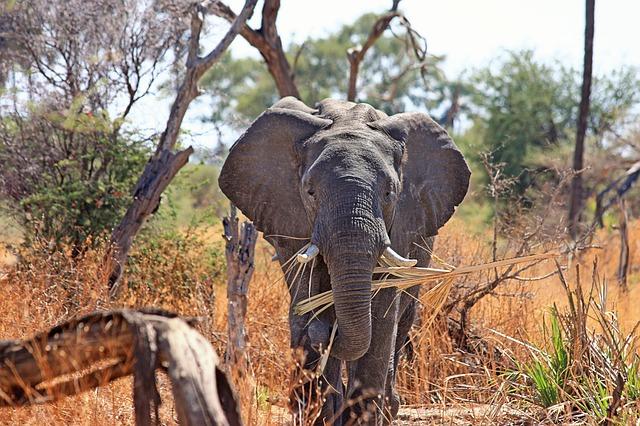 elephant-518186_640.jpg