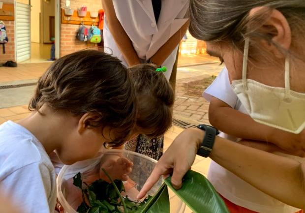 A imagem mostra um recipiente plástico transparente contendo folhas verdes. Ao redor do recipiente, duas crianças e dois adultos observam.
