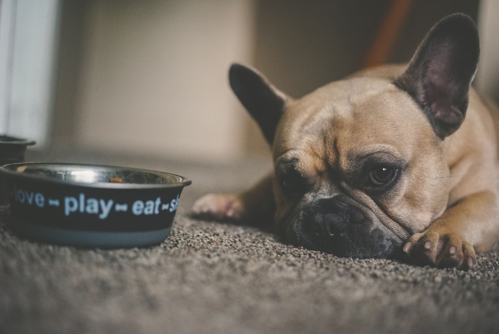 dog with bowl