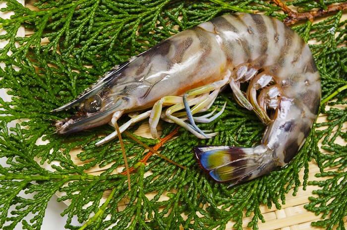 明蝦身上棕色的節紋與斑節蝦相似,許多人常常會搞混,但其實只要以彩色的尾端來判斷就很容易分辨了。