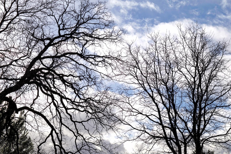 U V Bare Trees.jpg