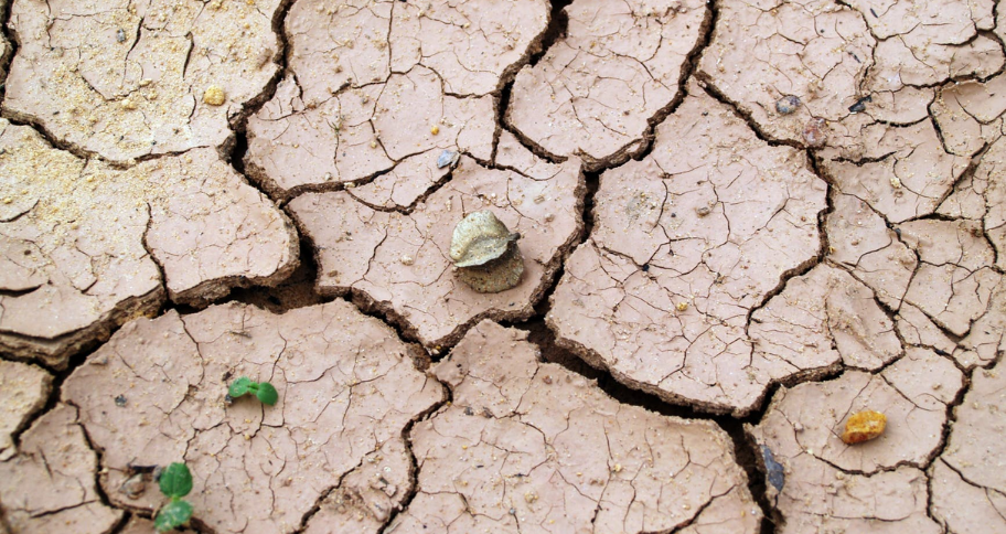 Water Scarcity In India causes land to become infertile for farming