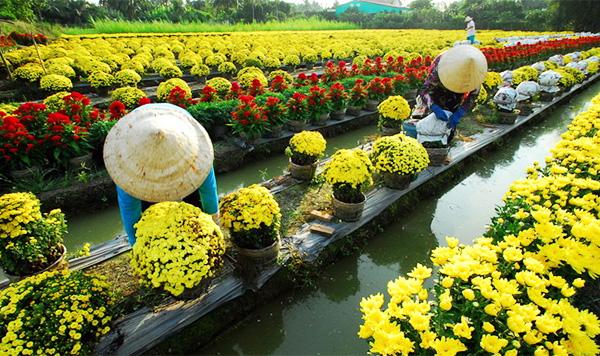 village-de-fleur-sud-du-vietnam