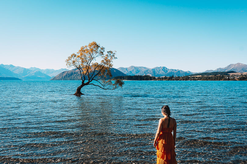 View of #thatwanakatree at Lake Wanaka in Autumn