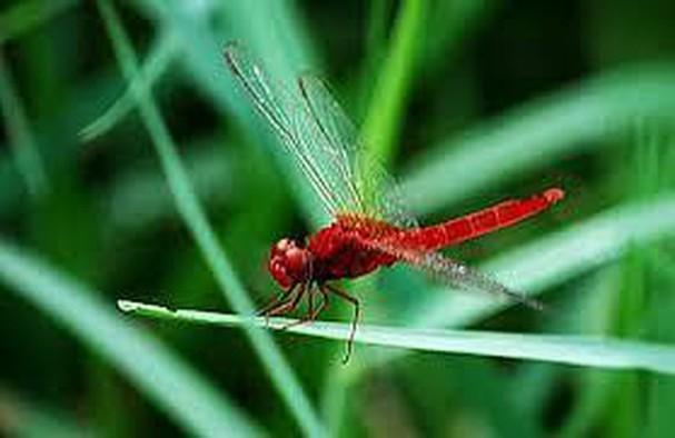 Diễn đàn rao vặt tổng hợp: Những loài côn trùng có ích bà con nông dân nên biết SyfVyDwlckXDy-bcoGC8kvA3DJXiPW1xZ_0fl2VA-cbj66wm-dUetwJz6spJtbAetWkneDQSrsh9oSiAtfx16H7QFxdYaG6QfqN2A542Q0LizwU_RxiEOyQUgdJ3XRHg83TrHmYm