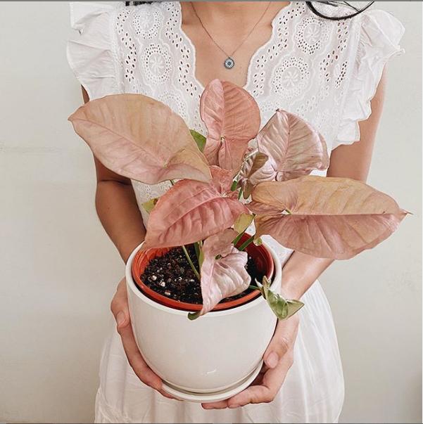 buy plants online malaysia