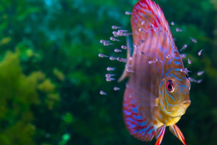 How do all those fish get into those aquariums?