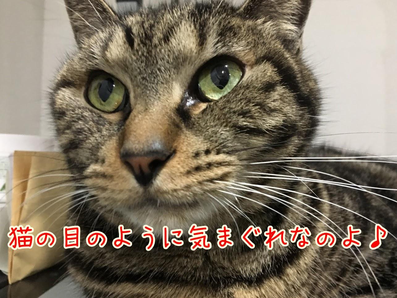 目の病気に注意!猫の目の仕組みと瞳孔が開く理由