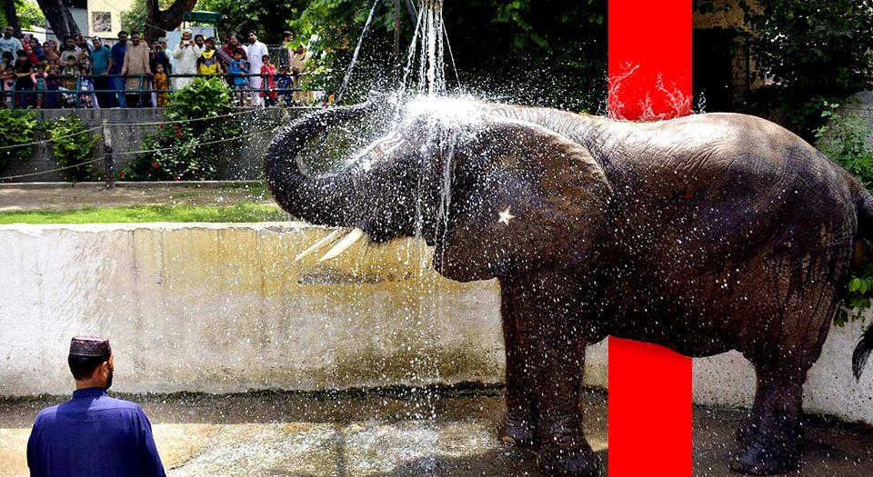 Karachi international zoo
