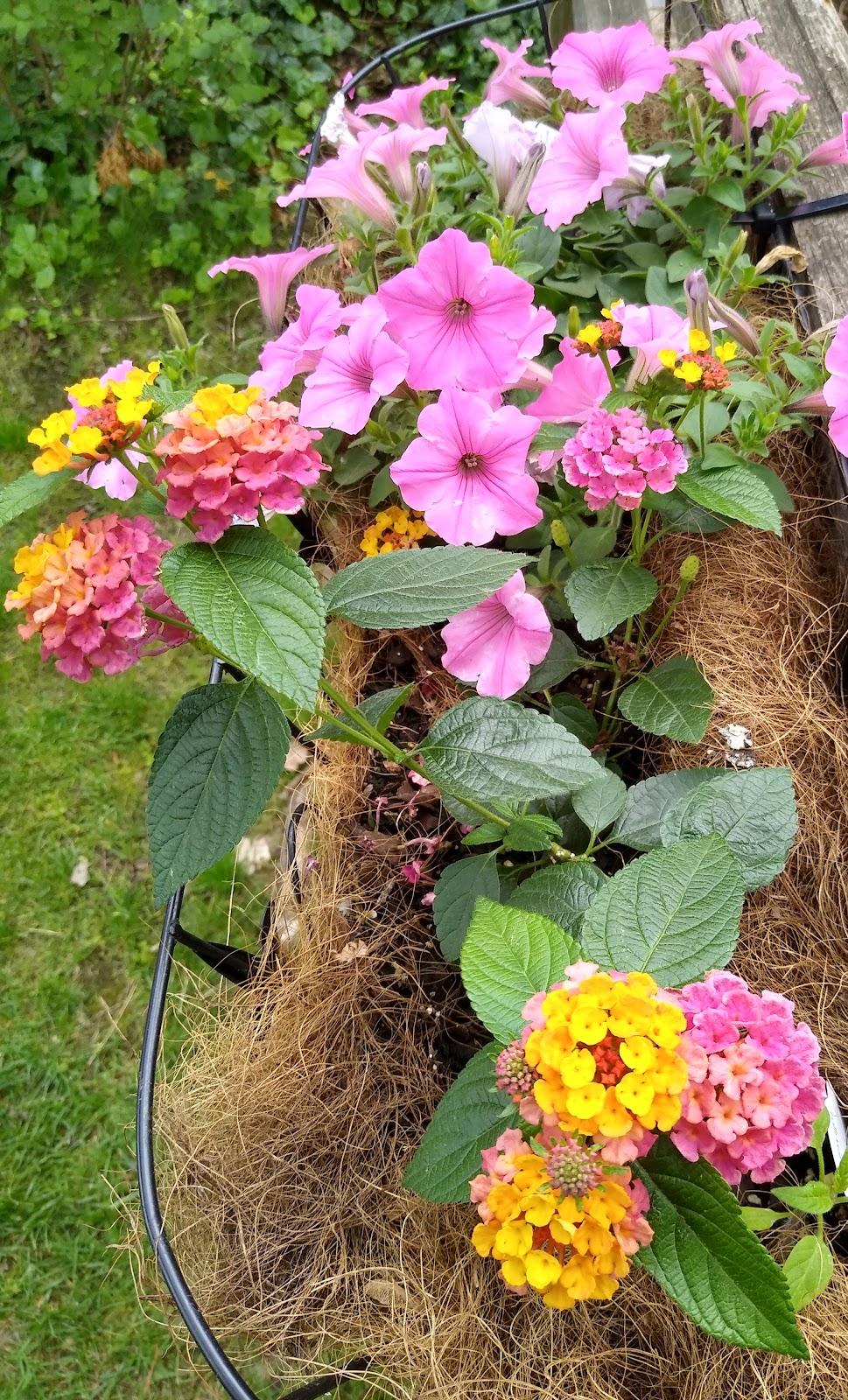 fence flower basket image